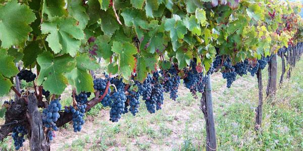イタリアワイン、カンパニア州のDOCG