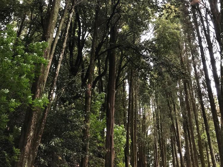 カステッロディブローリオの森