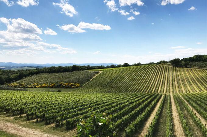 ロッカデッレマチエのブドウ畑