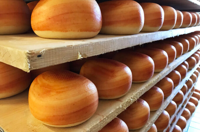 チーズ工場見学